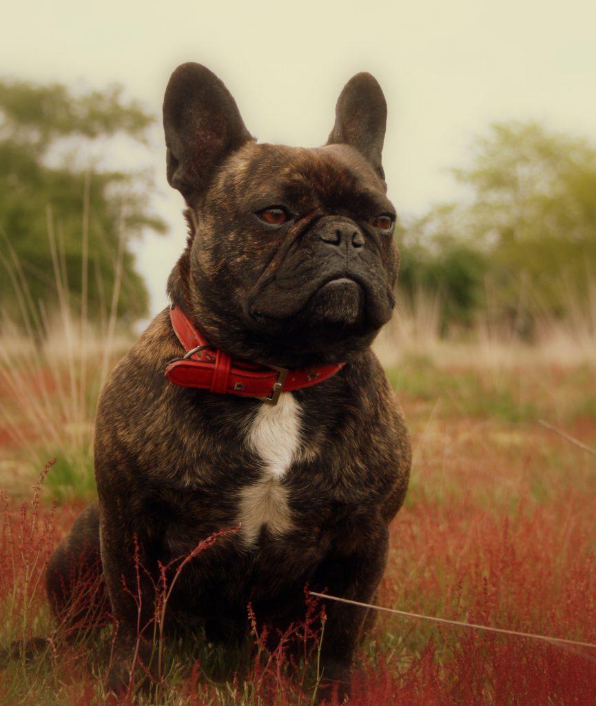 Cato-succesvolle-herplaatsing-ndjoy-cuijk-hond-foto-voorkant-zittend-succesverhaal