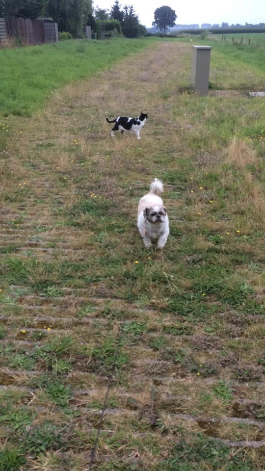 honden-die-een-baasje-zoeken-zowy-kruising-shih-tzu-maltezer (5)