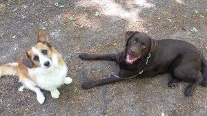 disclaimer-kim-jans-de-bruijni-ndjoy-n'djoy-voor-hulp-aan-honden-en-hun-baasjes-omgeving-cuijk