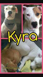 hond-gevonden-voor-mensen-ndjoy-bedankt-kyra-nieuwe-baasjes-foto
