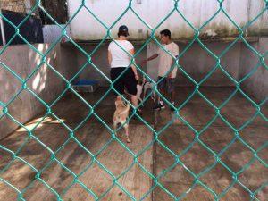 hulp-in-mexicaans-asiel-ndjoy-hulp-aan-honden-kim-jans-de-bruijni-cuijk