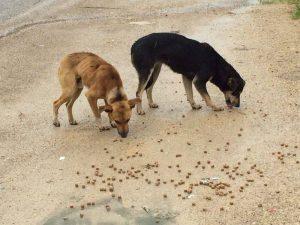 hulp-mexicaanse-zwerfhonden-voer-ndjoy-hulp-aan-honden-kim-jans-de-bruijni-cuijk