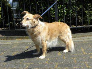 selly-hond-buitenland-woonde-in-nederland-eigenaar-terminaal-gouden-mandje-gevonden-door-ndjoy