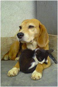 ndjoy-neemt-weer-nieuwe-hulpvragen-aan-ndjoy-cuijk-hulp-honden-baasjes
