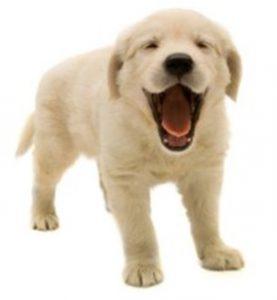 update-ndjoy-de-hoogtepunten-van-het-eerste-half-jaar-ndjoy-cuijk-hulp-aan-honden-baasjes