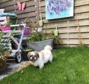 zowy-thuis-gevonden-ndjoy-herplaatsing-hond-cuijk3