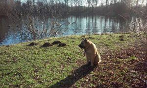 max-grote-hond-zoekt-thuis-ndjoy-brabant-hulp-honden-baasjes-herplaatsing-boxmeer
