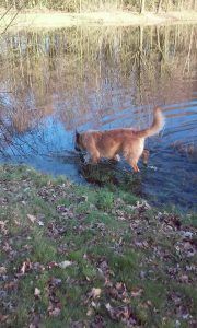 max-hond-zoekt-thuis-ndjoy-brabant-hulp-honden-baasjes-herplaatsing-boxmeer