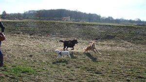 wandeling-cuijk-honden-ndjoy