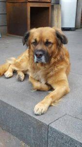 boef-baasje-gezocht-ndjoy-hulp-aan-honden-baasjes-brabant