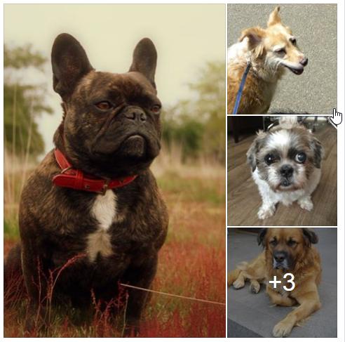 2017_05_22-N_Djoy_hulp-honden-baasjes-herplaatsing-brabant-cuijk-boxmeer-doen