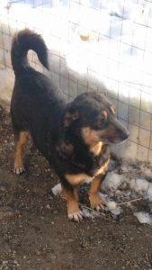 maatje-gezocht-gevonden-felix-roemenie-ndjoy-verzoek-herplaatser-hulp-honden-baasjes4