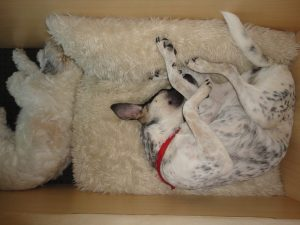 herplaatsing-marley-hond-ndjoy