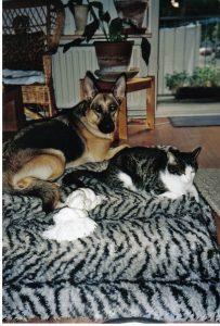 hond-kat-ndjoy-hulp-honden-baasjes-katten-geen-voedselhulp-meer-aan-alleen-katten