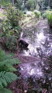 cato-water-ndjoy-succesvolle-herplaatsing-hond-cuijk-boxmeer-hoe-gaat-nu-deel-1