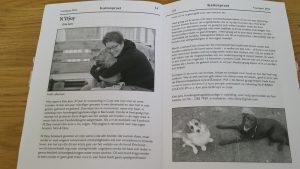 ndjoy-in-de-media-hondenhulp-cuijk-boxmeer-kattenpraat-kattenzorg-nijmegen