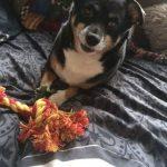 ndjoy-win-voerpakket-kat-hond-cuijk-boxmeer