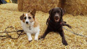 noa-djoy-ndjoy-hulp-honden-baasjes-cuijk-boxmeer-vrijwilligers-gezocht-vacatures-vacature