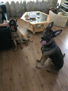 bas-links-ndjoy-hulp-honden-baasjes-succesvolle-herplaatsing