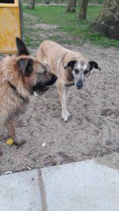 max-nieuwe-vriendin-hond-ndjoy-herplaatsing-honden-brabant