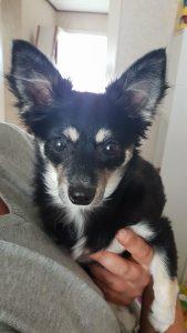 pip2-ndjoy-herplaatsing-honden-brabant