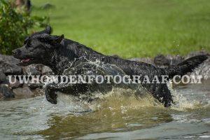 uw-hondenfotograaf-poeleke-hondenwandeling-ndjoy
