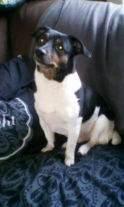 hondenhulp-doneer-doneren-potje-ndjoy-hulp-honden-baasjes