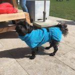 2018-04-08-hondenwandeling-ndjoy-poeleke-fotos