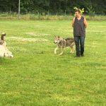 foto-lezing-wolfhonden-ndjoy7