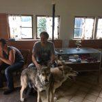 foto-lezing-wolfhonden-ndjoy8