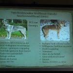 foto-lezing-wolfhonden-ndjoy9