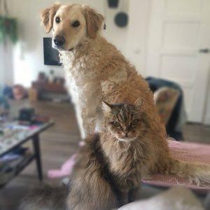 anne-boxmeer-vrijwilliger-ndjoy-hond-kat