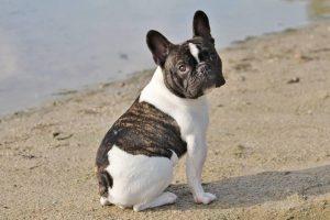 marieke-fransen-vrijwilliger-ndjoy-hulp-honden-baasjes-hond