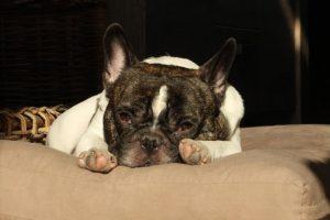 marieke-fransen-vrijwilliger-ndjoy-hulp-honden-baasjes-hond-foto