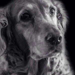 miranda-melis-vrijwilliger-ndjoy-hulp-honden-baasjes-met-oude-hond