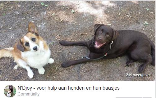 ndjoy-vacature-vrijwilligerswerk-buitendienstmedewerker-honden