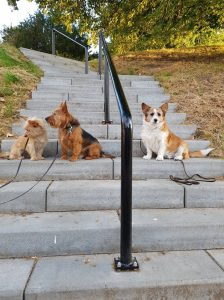 sponsorloop-over-ndjoy-hulp-honden-baasjes-kim-de-bruijni