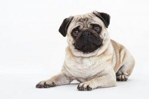 toby-succesvolle-herplaatsing-ndjoy-hulp-honden-baasjes2