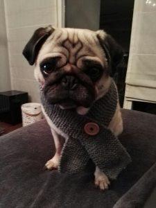 toby-succesvolle-herplaatsing-ndjoy-hulp-honden-baasjes4