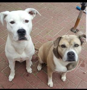 diesel-diego-herplaatsing-ndjoy-hulp-honden-baasjes-beilen