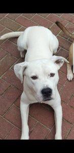 diesel-diego-herplaatsing-ndjoy-hulp-honden-baasjes-beilen5