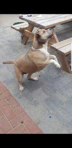 diesel-diego-herplaatsing-ndjoy-hulp-honden-baasjes-beilen6