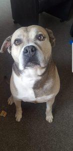 diesel-diego-herplaatsing-ndjoy-hulp-honden-baasjes-beilen8