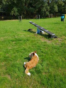 hondenspeeltuin-midden-drenthe-aanrader-ndjoy7