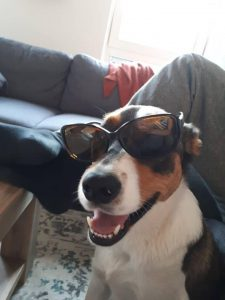 denzo-kruising-appenzeller-ndjoy-herplaatsing-hond3