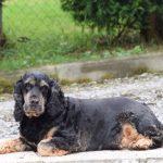 tapi-dia-herplaatsing-cocker-spaniels-ndjoy-hulp-honden-baasjes2