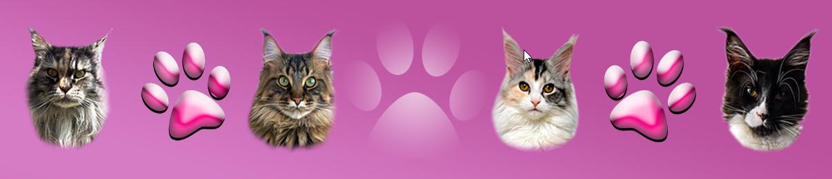 in-het-zonnetje-kattenoppas-nijmegen-ndjoy-hulp-honden-baasjes