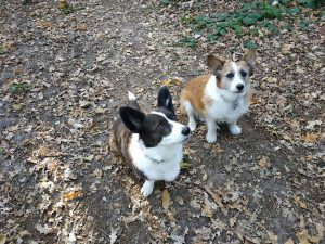 ndjoy-even-voorstellen-vrijwilliger-wim-plant-tessa-djoy-hulp-honden-baasjes
