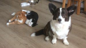 ndjoy-even-voorstellen-vrijwilliger-wim-plant-tessa-karel-pelle-hulp-honden-baasjes