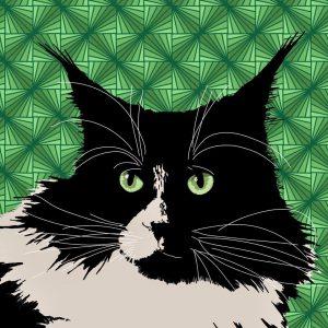 winactie-kattenherplaatsing-opbrengst-ndjoy-loterij-voor-ndjoy